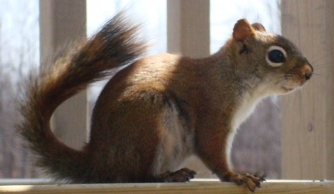 Picture of a little squirrel I took back in 2008
